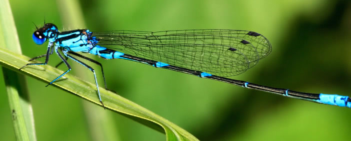 dragonfly_header_img