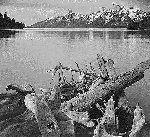 Ansel Adams Driftwood