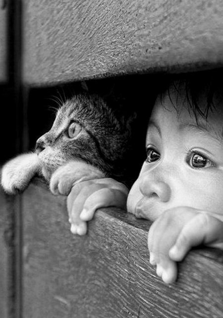 Peeping Cat And Child