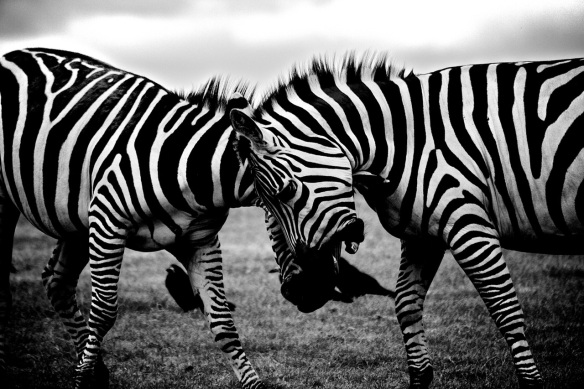 Clash of The Stripes